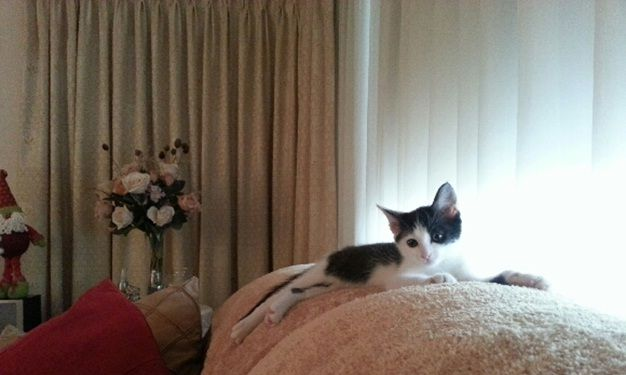 Our adorable Nikita when she was a tiny kitty!