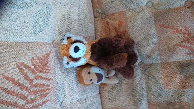 Lost on 05 Jun. 2016 @ Kirkcaldy town centre. Lion lost either on Kirkcaldy high Street on in the Mercat. Well loved Lion, he has been with my son all his life. Visit: https://whiteboomerang.com/lostteddy/msg/wt212m (Posted by Adele on 05 Jun. 2016)
