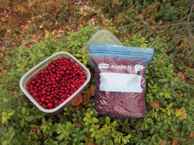 Kerää marjat metsässä suoraan tukevaan  ja kestävään Tuplis-pussiin ja sujauta pakkaseen.