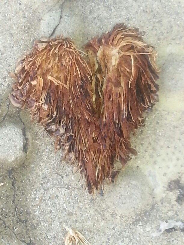Pinecone heart.