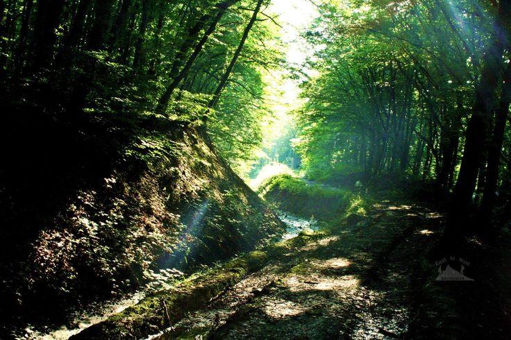 Quba you make me feel like I'm in a different world  مدينة قوبا ، شعرنا معك و كأننا في عالم آخر #easttowestadventures #kuba #quba #azerbaijani #azerbaijan #daytrip #roadtrip #hiking #forest #greenlight #shadows #striking #denseforest #fairytale #inadream #forestbathing #greenleaves #forestphotography #eveningshot #irishabroad #jordanian #intothewoods #foreststream #travellers #travelblog #instatravel #joinme