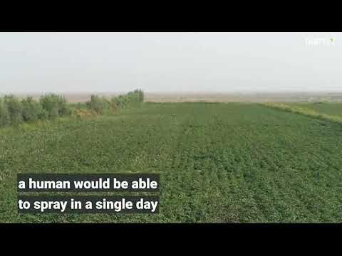 3,000 crop spraying drones help Chinese farmers fly into the