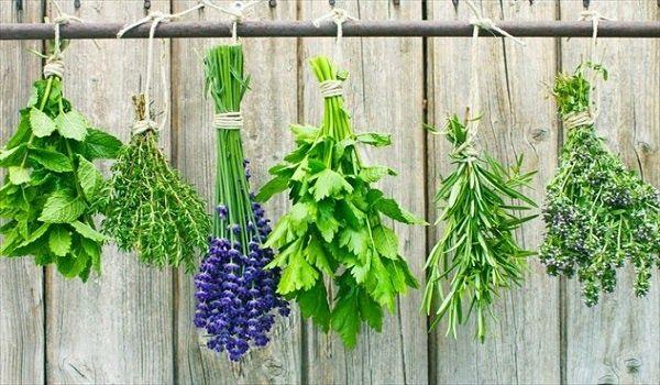 Τα 12 βότανα για κάψιμο λίπους καλύτερα και από γυμναστήριο