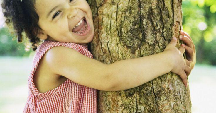 Cómo hacer crecer un árbol de sauce que llora utilizando una rama. El sauce llorón es un árbol impactante por la forma de sus hojas y la caída de sus ramas. Es originario de China y llega a medir hasta 20 metros. Es un árbol poco longevo y se le suele plantar cerca de cursos de agua. Tiende a prosperar en todo tipo de clima y suelos aunque prefiere los húmedos. Su reproducción es de las más sencillas y leales ya ...