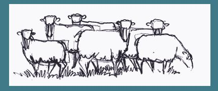 "Drawing lesson - ""Learn to draw sheep"" - FREE!"