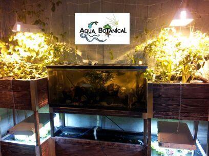 Aqua botanical indoor aquaponics system 55 gallon fish for Aquaponics fish tank for sale