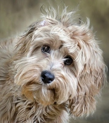 Adoration: Doggie, Canine, Animals, Creature, Pets, Puppy, Cute Dogs, Furry Friends