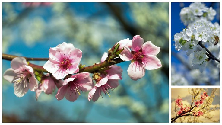 nature Photography | Spring | #spring #photography