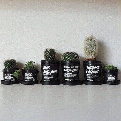 Using old lush packages as plant pots? Genius✨✨✨