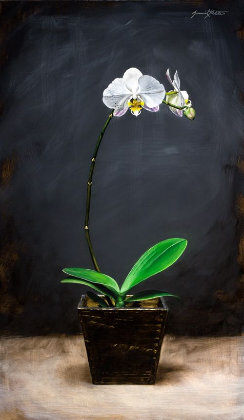A still life painting of a tall orchid with white flowers ...