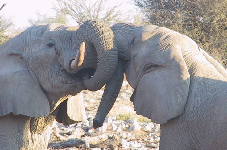 Africa Overland Tours: South East Explorer, Cape Town to Nairobi
