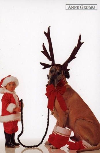 Just a boy and his reindeer!
