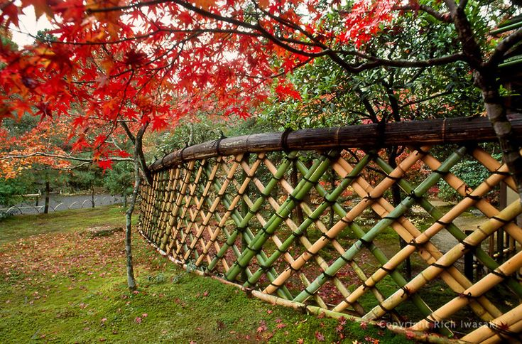 Curved Bamboo Fence