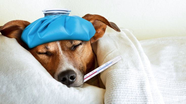 10 Deadly dog illnesses every pet owner should know: Dog illnesses