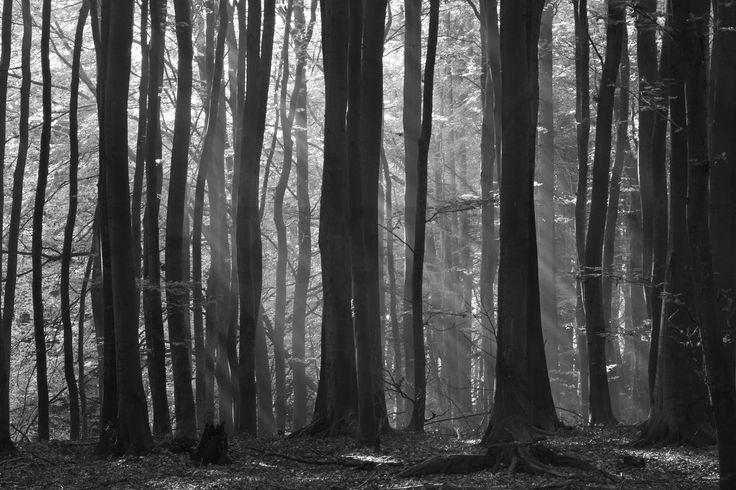 Fairy Forest - Fototapeter & Tapeter - Photowall