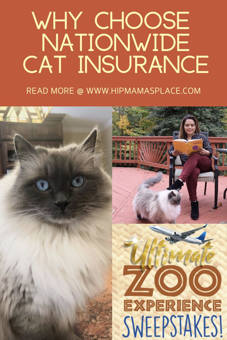 Get your free quote for cat insurance with nationwide pet