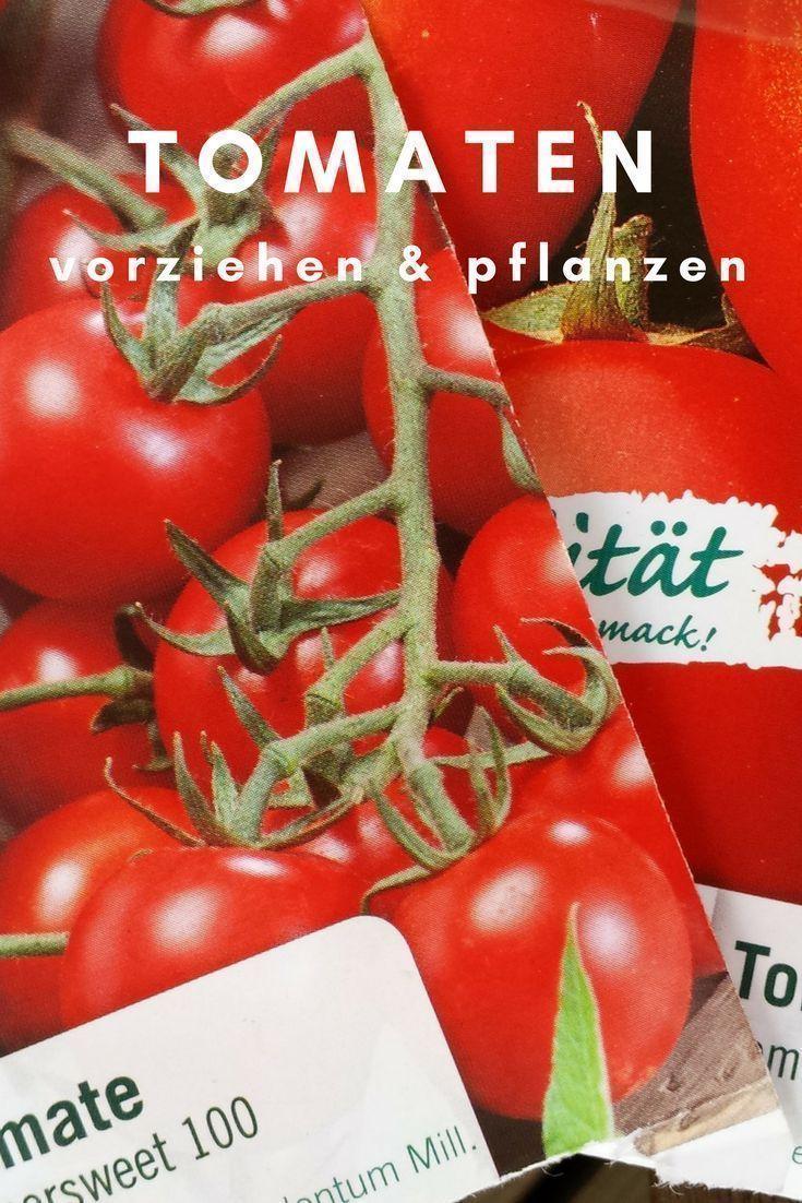Garten Tomaten Unterwegs Vorzie Vorziehen Garten Tomaten Pflanzen Garten Pflanzen Tomaten Unt Tomaten Pflanzen Pflanzen Einheimische Pflanzen