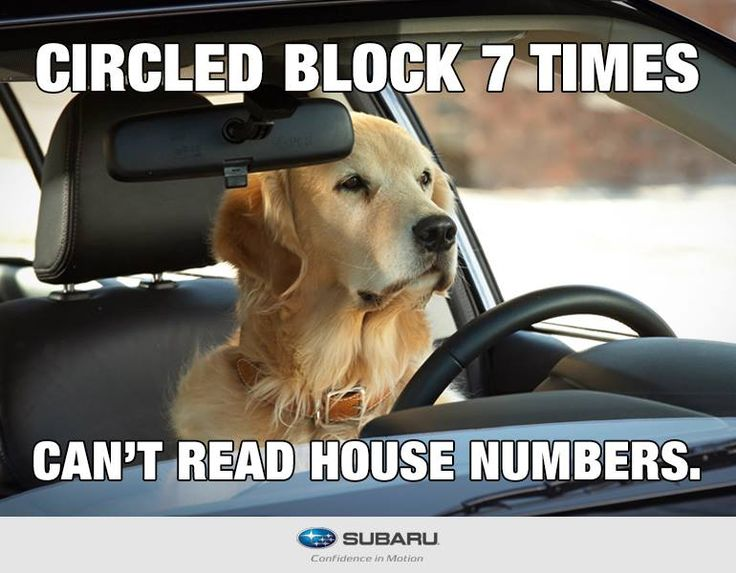 Hilarious Dog Pictures With Quotes