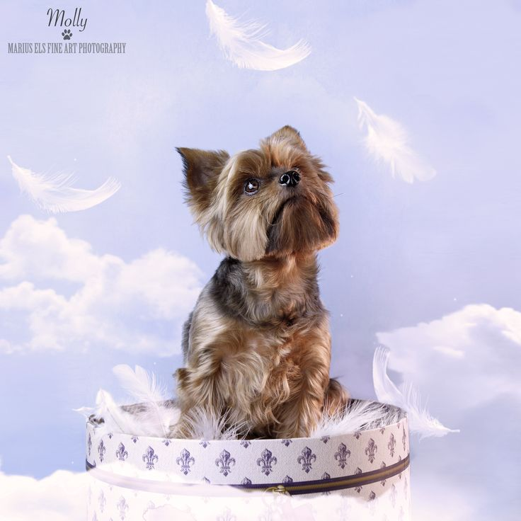 Doggie Delights 3 with Molly - Yorkshire Terrier