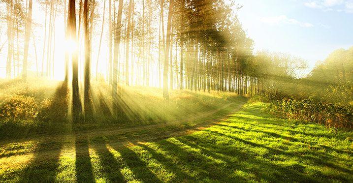 Exposição à luz solar - Saúde