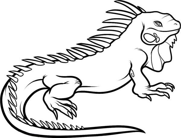 On Iguana Colouring Pages Clean Lines Coloring Pages