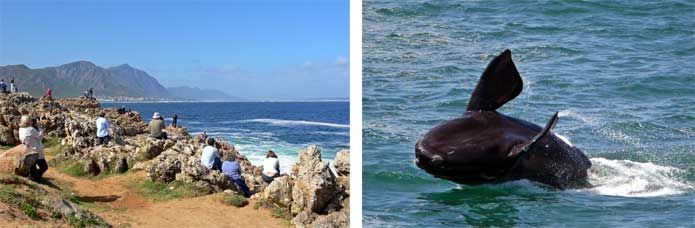Hermanus Whale Festival | Craft Beer Festival in September, Cape Town, South Africa