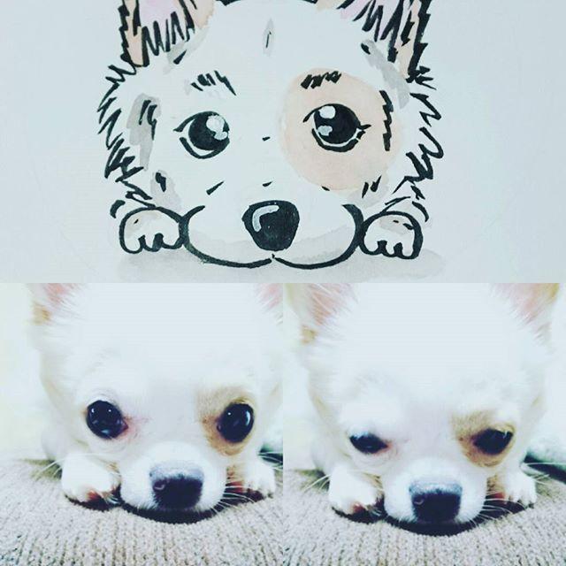 むむむ。。 なんか違うかな?(笑) #チワワイラスト #チワワ似顔絵 #チワワ#チワワ部 #愛犬#ちわわ#ちわすたぐらむ #チワワ可愛い #チワワ大好き
