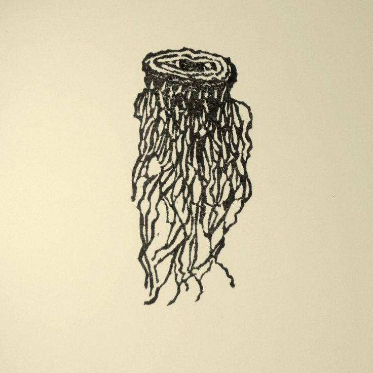 Rubber Stamp №120 — Dried Leek Roots