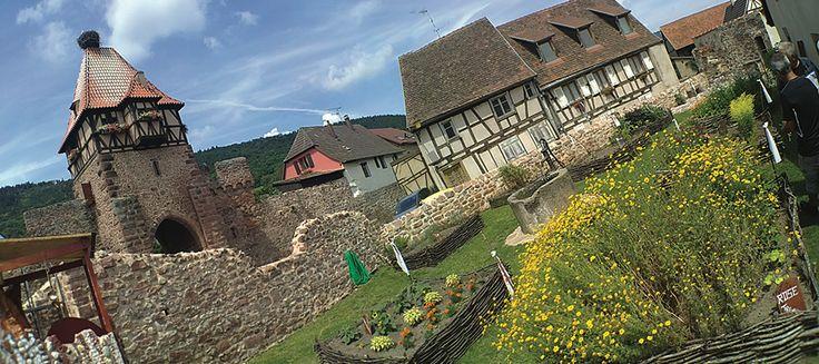 Le jardin médiéval.