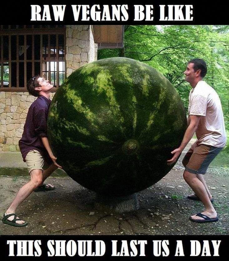 Vegan Memes Vegan Jokes Vegan Memes Vegan Humor