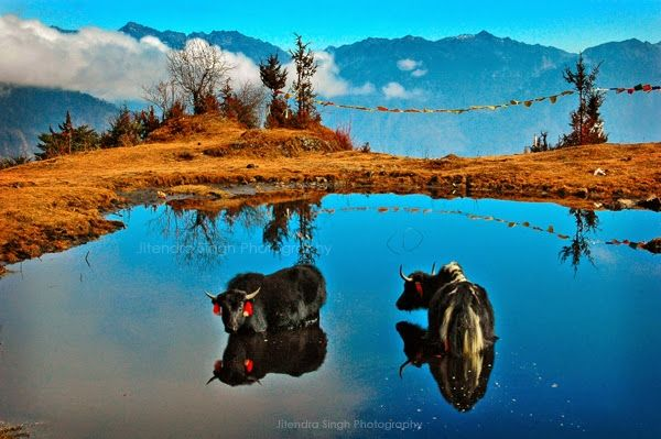 Top 12 Exciting Trips in India Under Rs. 5000 : TripHobo Travel Blog