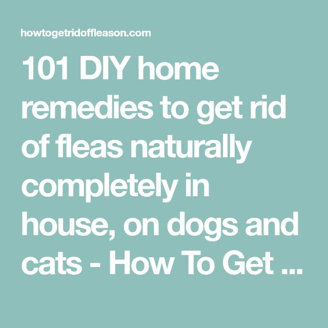 101 DIY home remedies to get rid of fleas naturally completely in house, on dogs and cats - How To Get Rid of Flea on Dogs on Cats and in the House