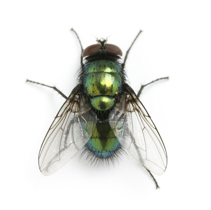 How Can You Keep Flies Away From Dogs