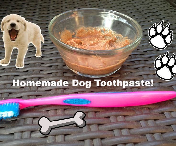 This is a super simple recipe to make toothpaste for your dogs. You should never use human toothpaste as it contains fluoride in it, which is poisonous to dogs. Dog toothpaste can be expensive but, with this cheap alternative your dogs teeth can be clean in no time!