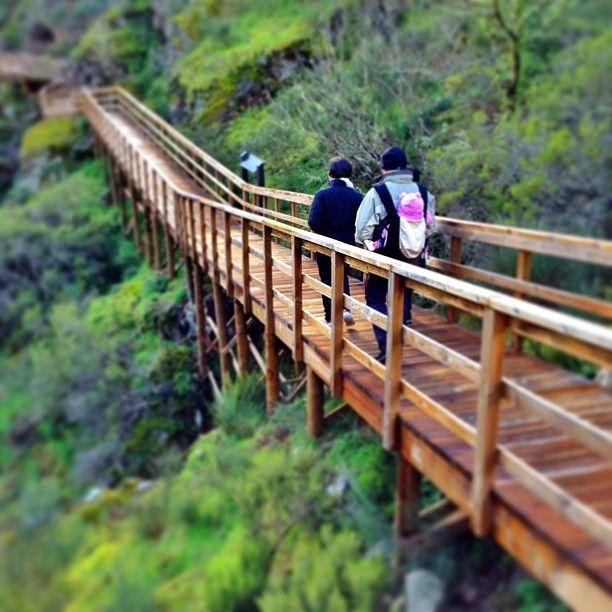 Por la ruta de las pasarelas en la #RibeiraSacra #Ourense, #Galicia #Spain Photo by eladioosorio