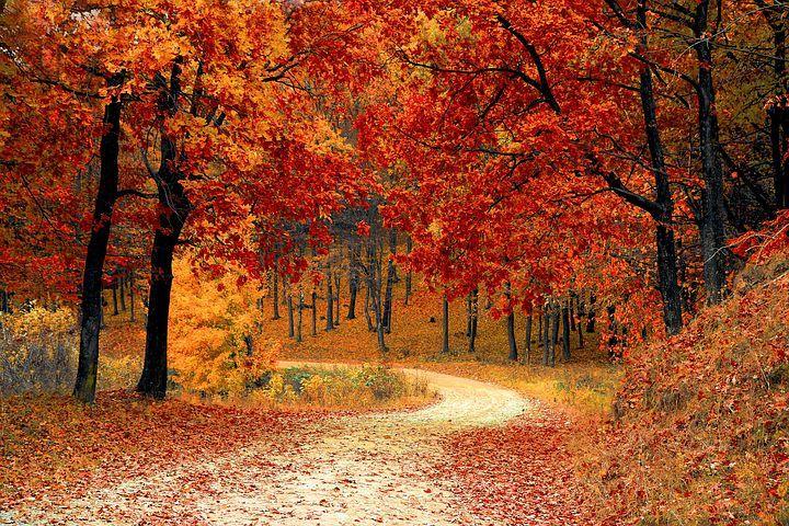 Høst, Red, Sesong, Skogen, Natur