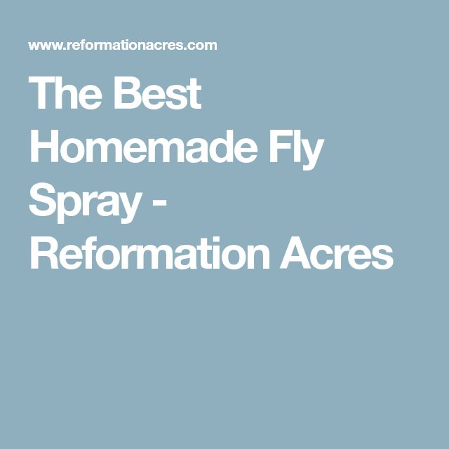 The Best Homemade Fly Spray - Reformation Acres