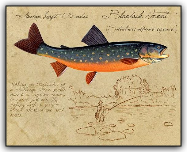 469 best images about fish art trout salmon on for Fly fishing art