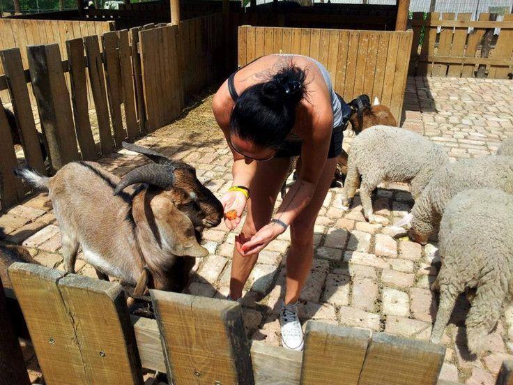 Animal sanctuary, somewhere in Hungary :)  (http://www.allatmentoszolgalat.com/), (https://www.facebook.com/pages/%C3%81llatment%C5%91-Sereg/124278791041612) https://www.facebook.com/269lifeHungary?ref=br_tf