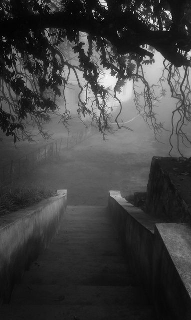 lovely black and white photo conoor, TN from flickr