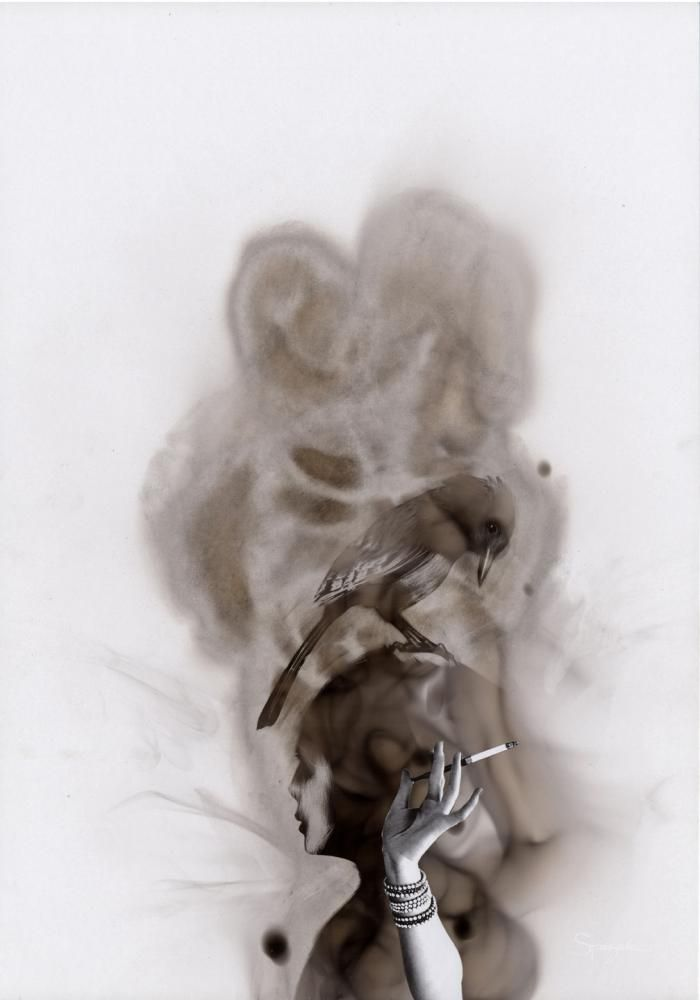 Steve Spazuk - bird series done with soot on paper