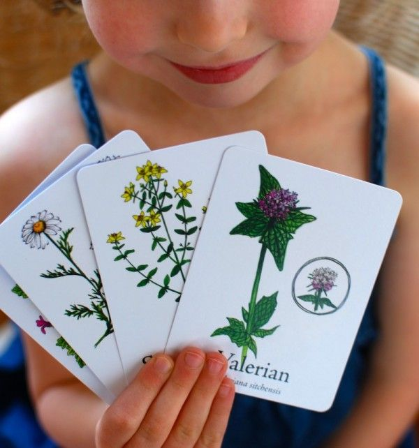 Wildcraft Cards. Awesome idea to teach kids what plants are safe to eat and touch and what plants aren't.