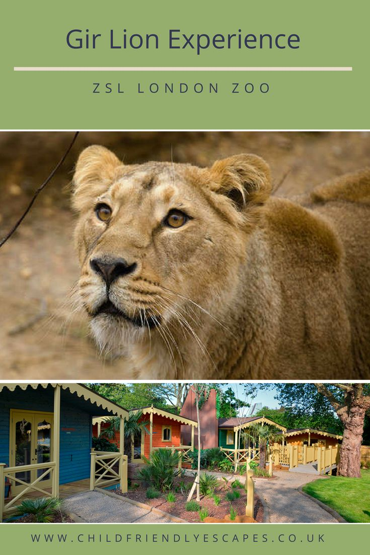 Kids will love the chance to of on their own mini safari with an overnight stay at Gir Lion at London Zoo. This family friendly experience will be one to remember.