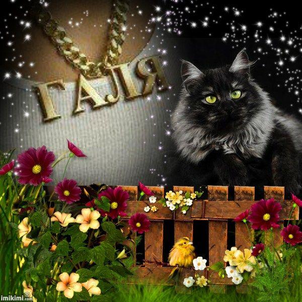 black cat-lissy005