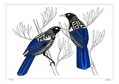 Kura Gallery Maori New Zealand Lovely illustration of pair of Tui's (parson bird). Royal blue, black and white, in pencil, coloured pencil and ink on paper. By Sam Clark, NZ artist.