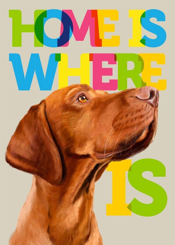 Home is where hungarian magyar vizsla portrait poster by SparaFuori, $20.00