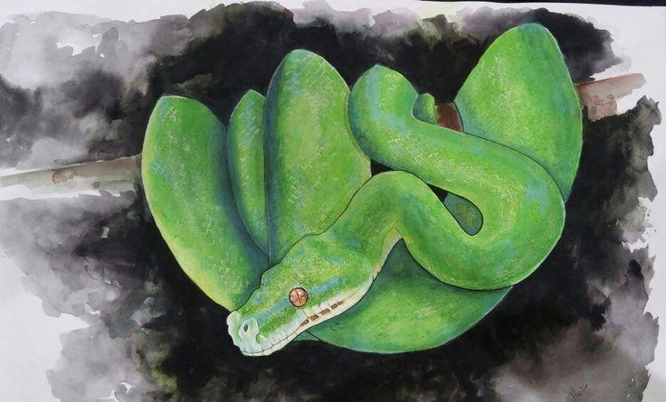 Green Tree Python - watercolor on paper. Artist: Ellenor Hastie https://www.facebook.com/Ellenor.Art/