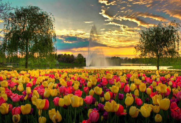.: Nature, Beautiful, Gardens, Places, Tulips, Flowers, Photo