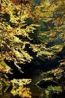 River Shine by MiraelFae