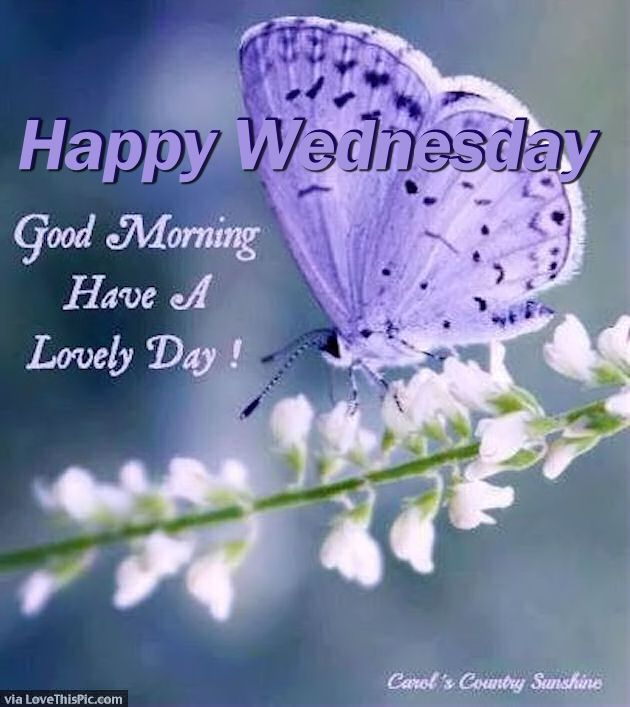 Pin By Patricia Hamm On Wednesday Good Morning Images Good Morning Beautiful Images Good Morning Wednesday